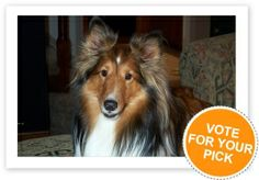 Your dog could be our Dog of the Week! Enter your dog and vote for your favourites in our dog photo contest Photography Competitions, Photography Contests, Dog Photo Contest, Cat Info, Hurricane Katrina, Crazy Dog, Sheltie, Dog Behavior, Dog Supplies