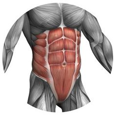 Consult the exercises during the training Abdominals Anatomy Sketches, Anatomy Art, Fitness Tips, Health Fitness, How To Get Abs, Abdominal Muscles, Gym Workouts, Workout Tips, Sculpting