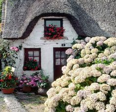 English Country Cottage... hygrangeas obligatory
