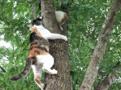 Video: Kitten up in tree not knowing how to come back down is given encouragement from Mama Kitty!