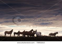 LOOK AT THEM HORSES