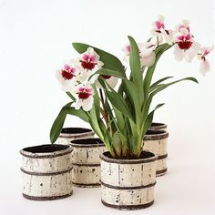 Pair blossoms with a pretty container chosen to complement your reception decor, then parade a row down a long table. Added bonus: Flowering plants are deceptively kind to the budget. Pansy orchids in buckets. Potted Plant Centerpieces, Orchid Centerpieces, Wedding Centerpieces, Centerpiece Ideas, Luau Wedding, Wedding Flowers, Wedding Ideas, Farm Wedding, Wedding Inspiration