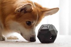 The Odin: a dog toy that engages your pet mentally and physically.