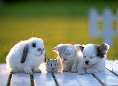 wit met zwarte vlekjes huisdiertjes