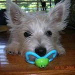 What? You thought pacifiers were just for humans?