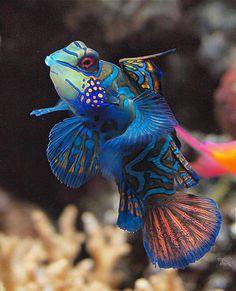 grouper randki który serwis randkowy