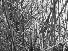 Linien by inezzy, via Flickr
