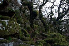 Wistmans's Wood, John Howe