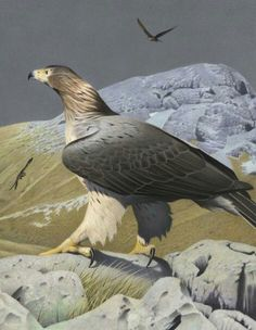 Haast-Eagle Harpagornis moorei Haast, 1872 New Zealand, extinct. Painting by Paul Martinson, from a lovely book on NZ extinct birds. Extinct Birds, Extinct Animals, Reptiles, Mammals, Pretty Birds, Beautiful Birds, Birds Online, Prehistoric Creatures, Prehistoric Dinosaurs