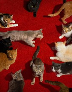 Cats by Alex Prager Crazy Cat Lady, Crazy Cats, Animals And Pets, Cute Animals, The Wicked The Divine, Lots Of Cats, Mystic Messenger, Cool Cats, Cats And Kittens
