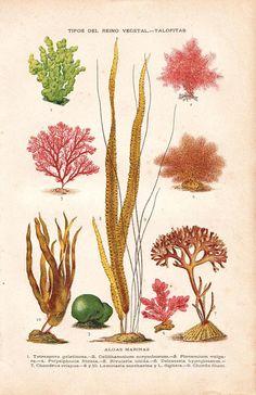 Seaweed by Sea Flora