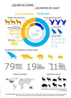 Estructura de los carroñeros en el mundo #naturaleza