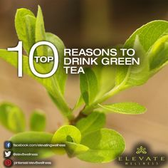 Health And Vitality From A Cup Of Green Tea? Number 7 Is The Reason We Drink It Every Day.
