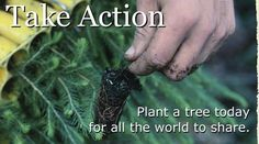 For Cadettes doing the Breathe program -- thought starters for Take Action projects involving trees.