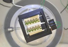 Cyanobacteria are photosynthetic micro-organisms that have been on Earth for billions of years. They are thought to be the primary reason why the Earth's atmosphere is oxygen rich.     Imagine a paper-based, disposable environmental sensor disguised as wallpaper, which could monitor air quality i...