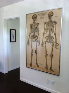 Vintage Skeletons