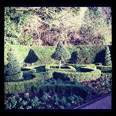 Beautiful greenery in Queen Mary's Rose Garden, Regent's Park, even in January. @Elizabeth MacKenzie- #webstagram