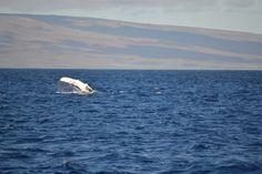 Whale watch 2014 毎年、子供たちのホエールウォッチング遠足にくっ付いていくのでありますが、今年もええ写真が撮れました!クジラさんが手をふってるでー!(笑)