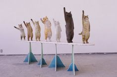 """Japanese artist Sakura Hanafusa made an artwork to interact with, her hand carved, high fiving cat sculpture 'High Seven' 2016 modelled on her family cats Lots Of Cats, Japanese Artists, Cat Art, Female Art, Art Dolls, Photo Art, Hand Carved, Cat Lovers, Art Pieces"