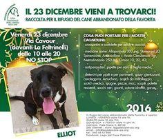 23/12 Raccolta per il #Rifugio del cane abbandonato della #Favorita #LNDC #Palermo