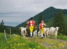 Alpaufzug, Appenzellerland