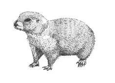 gopher pen illustration