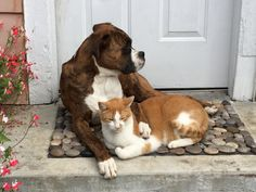 Best Friend Ever. http://ift.tt/2dOqalc