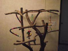 Tree Stands - Parrot Forum - Parrot Owner's Community