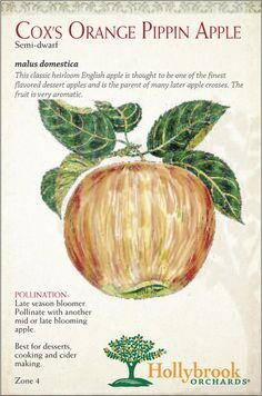 This is the benchmark for flavor in apples - from a good tree in a good year it can achieve exceptional flavor.