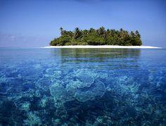 Maldives  #iledereve #plongée