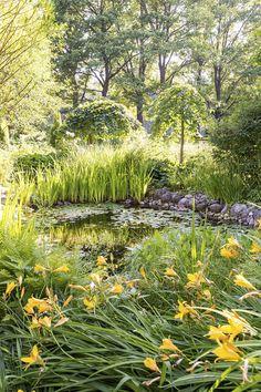 Inkoolainen puutarha on pionien valtakunta