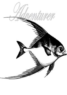 The adventure of the fish,live life to the fullest and do not stop for anything, enjoy life you only get one. Take the chance and go on your adventure.Support a artist Get One, Live Life, Just Go, Fish, Adventure, Artist, Animals, Animales, Animaux