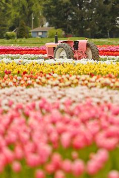 Everything You Need to Know About Visiting the Oregon Tulip Fields + Tips for the Wooden Shoe Tulip Festival // Local Adventurer Oregon Road Trip, Oregon Travel, Road Trip Usa, Travel Usa, Travel Tips, Visit Oregon, Great American Road Trip, Crater Lake National Park, Tulips Garden