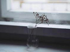 "64 Likes, 3 Comments - Aneta Skoupá (@lillyann48) on Instagram: ""cold misty morning in prague. 🌫️ #stay_cosy_november #moodofmywindow"""