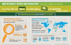 Check out this infographic to learn more about GMO regulation and the research and review it takes bring a GMO to market.