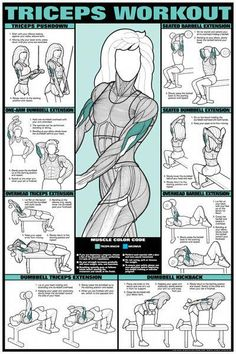 Abdominal Workout Back Workout Biceps and Forearm Workout Leg Workout Triceps Workout Triceps Workout, Tricep Workout Women, Forearm Workout, Workout Circuit, Fitness Herausforderungen, Fitness Motivation, Workout Fitness, Fitness Hacks, Health Fitness