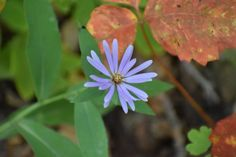 Orange Flowers, White Flowers, Autumn Morning, New Growth, Flower Pictures, Fall Season, Exploring, Bloom, Outdoors