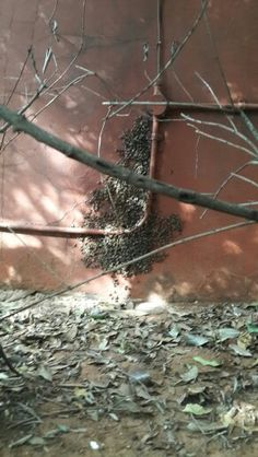 Bee removals in Johannesburg bee removed from hole in the wall