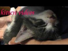Sleepy kitten、kitten videos,Cats videos 子猫動画&猫画像♪猫ニャーゴyoutube  funny cats videos,Cats and Kittens 猫のミャミチャンが♂猫に生まれ変わって帰ってきました♪ 名前はもちろんミャミ雄君!  先週の土曜日猫の譲渡会へ行って来ました。 いつも目を通す☆子猫譲ります掲示板に ミャミチャンと同じグレイ色の雑種の子猫の写真が ひょっとしてとミャミチャン?  やっと再会出きるかもと 家族3人で期待に胸膨らませて 先週の土曜日猫の譲渡会へ行って来ました。  3時から譲渡会に12時半から行って、 2時から準備をお手伝いで、ミャミちゃんに再会、 やっぱりミャミちゃんだ!   猫の譲渡規約書で分かったのですが、 なんと!ミャミチャンの命日5月10日にミャミ雄君が生まれてるではないですか。  ミャミチャン約束どうりに帰ってきてくれてありがとう、 お帰りなさい♪♂猫だからミャミ雄君。  ミャミ雄君はグレイの毛色と、 気に入らないと布団や座布団のの真ん中にオシッコするとこまでミャミチャンそっくりです。