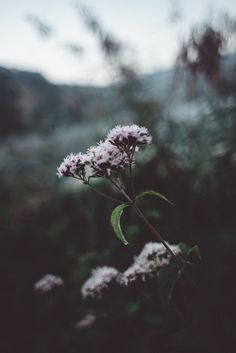 Her Tea Leaves — biancabaumann: Moody plants 🌺🍃 Spring Aesthetic, Nature Aesthetic, Flower Aesthetic, Aesthetic Images, Aesthetic Backgrounds, Aesthetic Wallpapers, Aesthetic Black, Flower Wallpaper, Nature Wallpaper