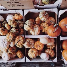 The Witching Hour // warmteas-crunchyleaves:   fall-in-new-york:  ...