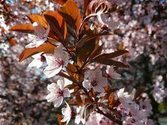 Celebrate All Year Long: Do You Celebrate Spring break?