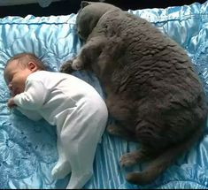 Oh my goodness!  That cat must be 20 pounds!