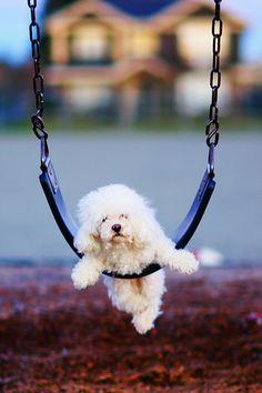 could somebody push me....please!