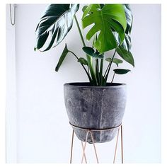 Copper plant stand and pot, Kmart!!!