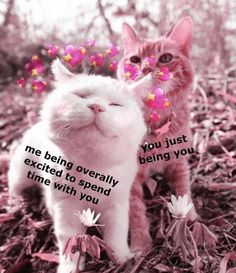 Wholesome Pictures, Cute Love Memes, Cute Messages, Lovey Dovey, Wholesome Memes, Mood Pics, Reaction Pictures, Cute Cats, Cute Pictures