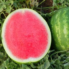 SEEDLESS WATERMELONS!!