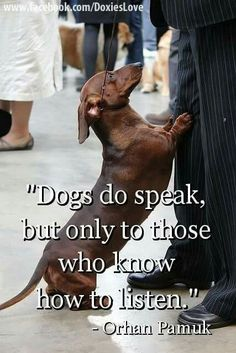 Dogs do speak, but only to those who know how to listen  #petquotes #dogquotes http://www.nojigoji.com.au/