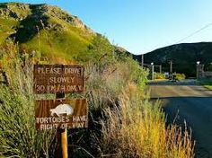 Image result for fernkloof nature reserve Nature Reserve, South Africa, Westerns, Cape, Mantle, Cabo, Coats