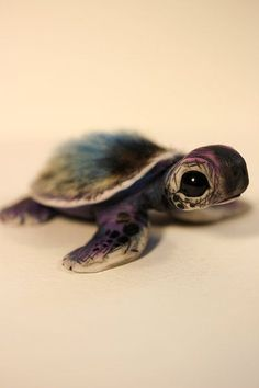 Sea Turtle Art, Turtle Love, Baby Animals Super Cute, Cute Little Animals, Baby Animals Pictures, Cute Animal Pictures, Cute Baby Turtles, Turtle Baby, Turtle Neck